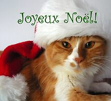 Joyeux Noël - Christmas Cat Wearing Santa Hat by MoMoCards