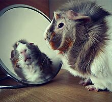 Guinea Pig in a Mirror by PTP2013