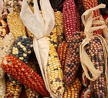 Cobs of Many Colors by rhamm