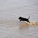 Dog playing in the sea by Prettyinpinks