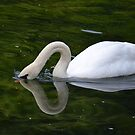 Swanning around by Prettyinpinks