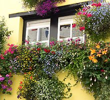 window boxes by Anne Scantlebury