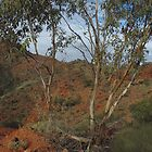 The picturesque Flinders Ranges  by imaginethis