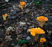 Trumpet Mushrooms by Nazareth