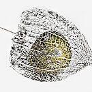 Cape Gooseberry by Ladyshark