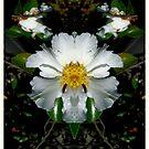 White Flower Fantasy by George Petrovsky