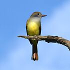 Great Crested Flycatcher (iPad Case) by William Brennan