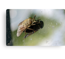 Fly on a Windscreen Canvas Print