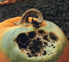Rotting Halloween Pumpkin by JeffraWPhotos