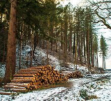 Winter Logs Forest of Dean by Nick Jenkins