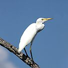 CATTLE EGRET by TomBaumker