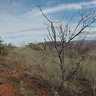 Flinders Landscape by imaginethis