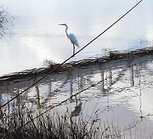 Bird on the Wire - Egret at Erskine River by imaginethis
