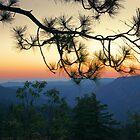 Yosemite Dusk by Ellen Cotton