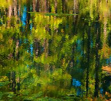 Reflections of Autumn by Tracy Jones