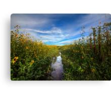 Sunflower Stream Canvas Print