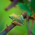 Colourful Froggie by Tracy Jones