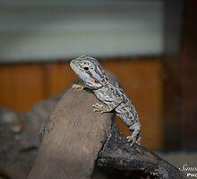 Spyro the Dragon by simonlloydphoto