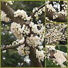 White Eastern Redbud Collage by Linda  Makiej