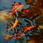 Goldfish - Grove, OK by Robert Baker