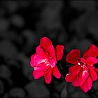 Geraniums in Space by GW-FotoWerx