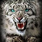 Snow Leopard 3 by Cliff Vestergaard