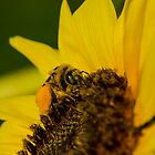 Busy Bee  by SimplyKlick