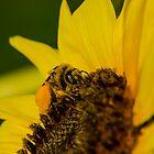Busy Bee  by Nicole  Markmann Nelson