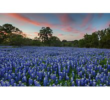 Texas Bluebonnet Images - Evening in the Texas Hill Country 1 Photographic Print