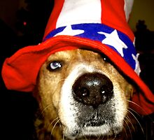 Brown/White Dog with Blue Eyes Wearing Red White Blue Hat by WhimsyvilleUSA