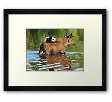 Taking a Ride on the Panda, err, um, Moose Express Framed Print