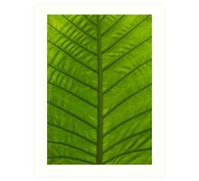 Tropical Green Leaf Art Print