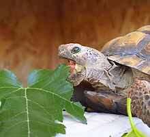 Hungry Turtle by Jenna Boettger Boring