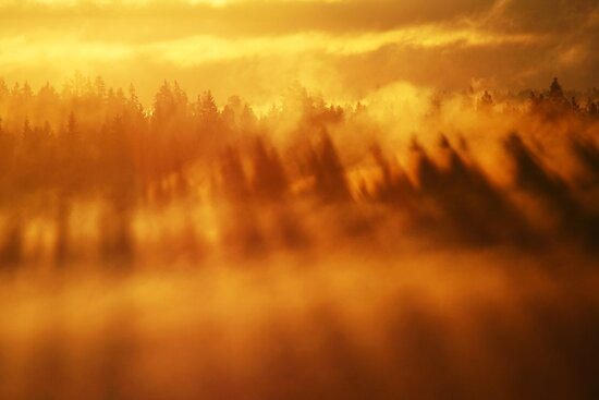 3.9.2013: Morning in Torronsuo National Park II by Petri Volanen