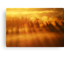 3.9.2013: Morning in Torronsuo National Park II Canvas Print