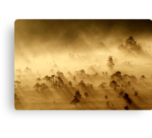 3.9.2013: Morning in Torronsuo National Park IV Canvas Print