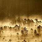 3.9.2013: Morning in Torronsuo National Park VI by Petri Volanen
