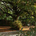 Botanic park in Coimbra by Lavanda
