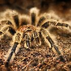 Arachnid by Heather Haderly