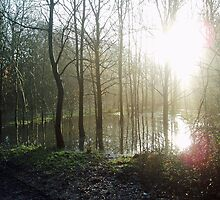 Winter Sun Through Trees and Water by Andy Merrett