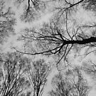 Spring Trees - Black and White 1 by Tracy Faught