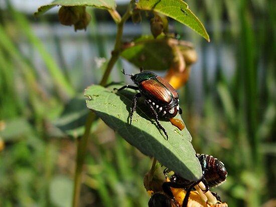 Beetle Juice by vigor