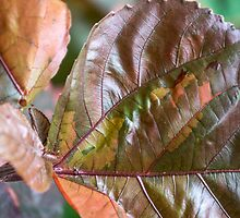 coloured foliage by Anne Scantlebury