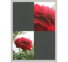 Red Rose with Light 1 Blank Q6F0 Photographic Print