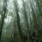 Rainforest mist. D'Aguilar range. Queensland. by Ian Hallmond