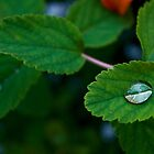 Water Drops on Green Leaves by Michael Atkins