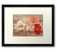 Poppies in Red, White & Peach Framed Print