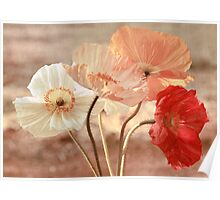 Poppies in Red, White & Peach Poster