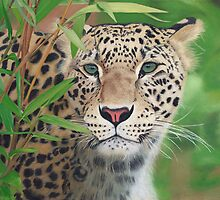 Leopard in the Woods by Alina Kaplanov
