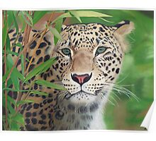 Leopard in the Woods Poster